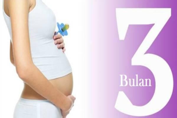 hamil 3 bulan ciri ciri janin yang sehat dan normal