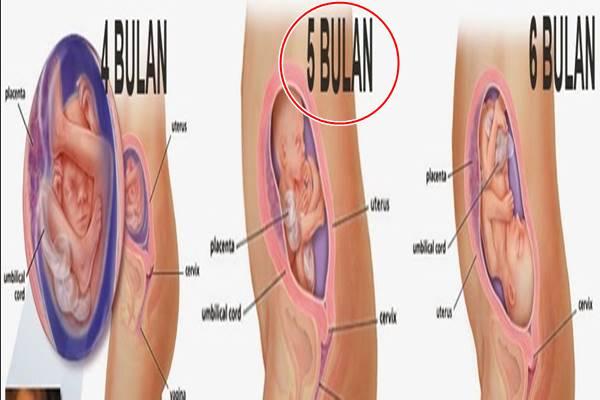 hamil 5 bulan ciri-ciri janin yang sehat dan normal