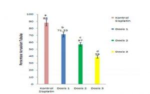 grafik perbedaan kerusakan ginjal setelah pemberian daun kesum