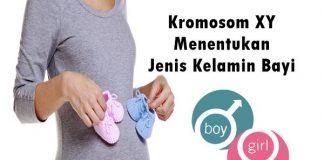 cara program hamil anak laki-laki dan perempuan