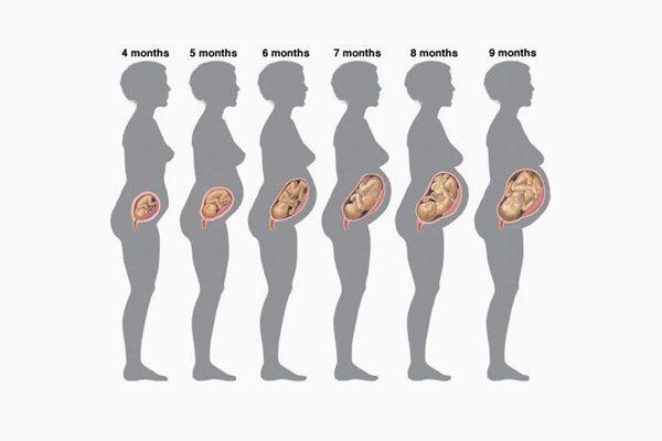 perkembangan janin setiap bulan